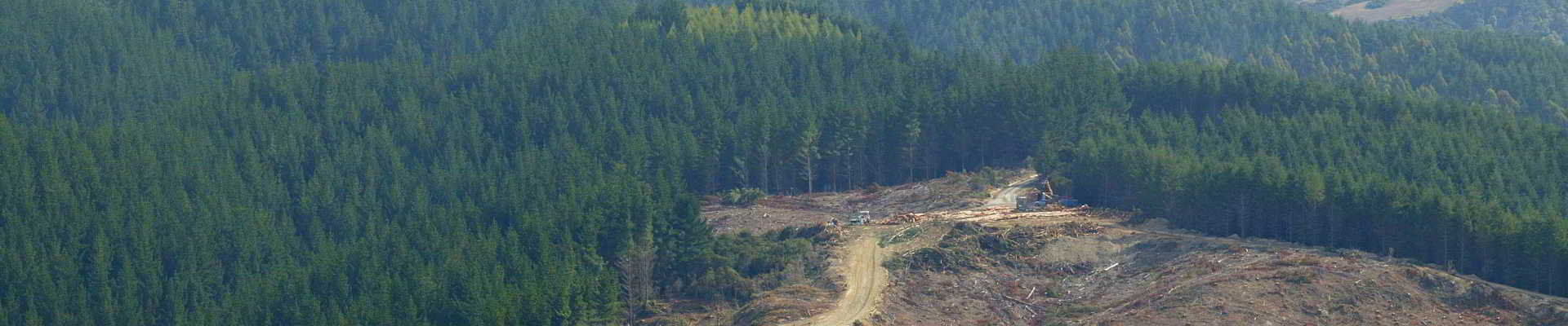 BYB Forestry Harvesting 001 1920 web