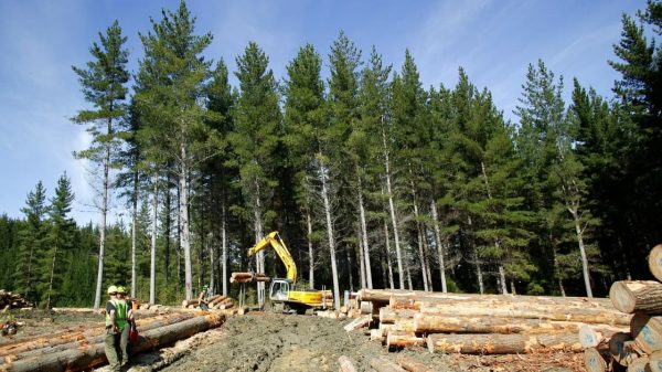 Southern forestry training course starts