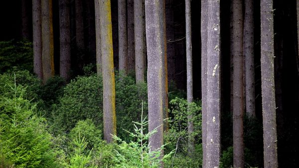 Forestry industry in the South remains resilient