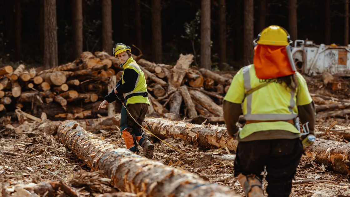 """Featured image for """"Forestry industry post COVID-19 busier than ever"""""""