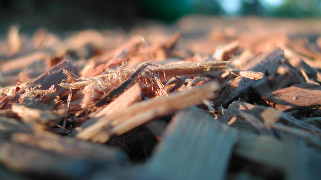 """Featured image for """"Fonterra announce another switch to wood biomass"""""""