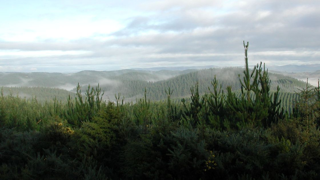 """Featured image for """"Two pension funds acquire NZ forestry asset"""""""